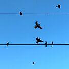 Birds Silhouettes  by LUISPENA