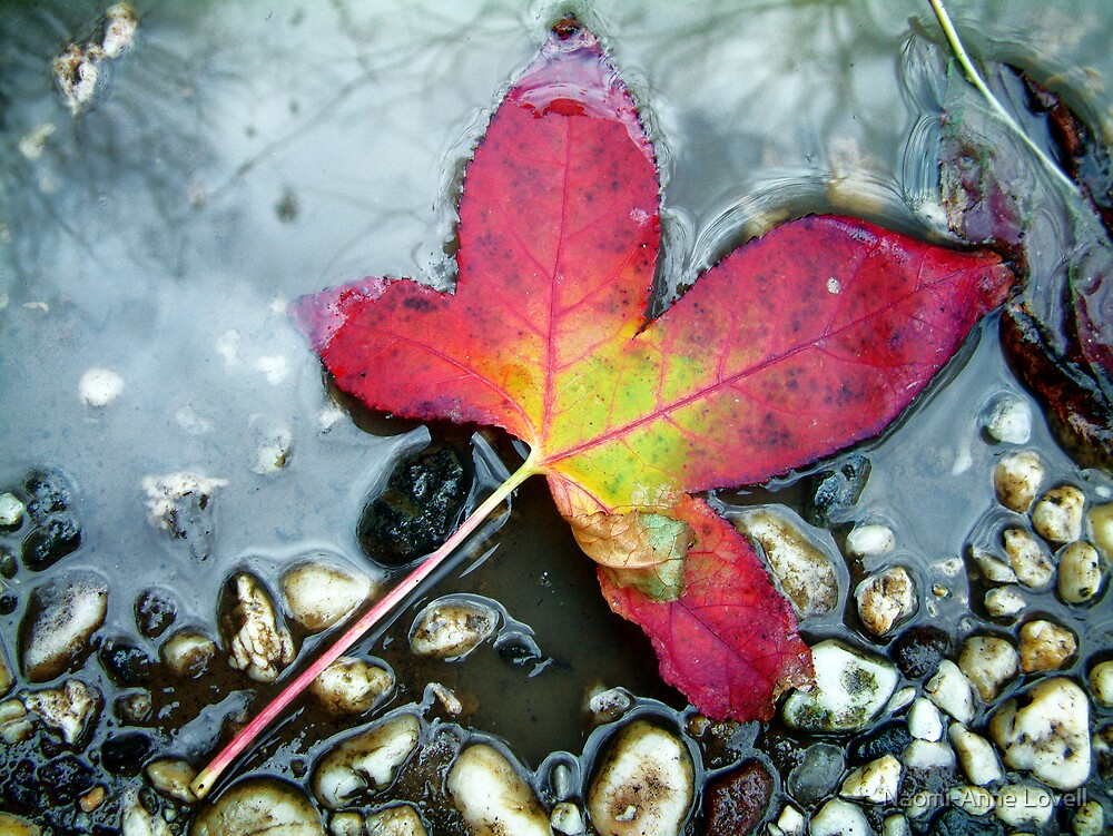 leaf by Naomi-Anne Lovell