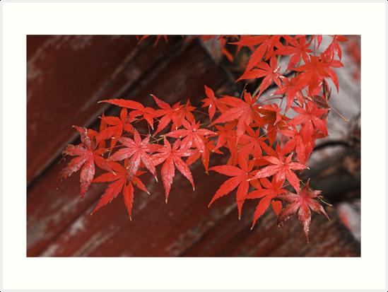 Autumn Glow by Philip Northeast