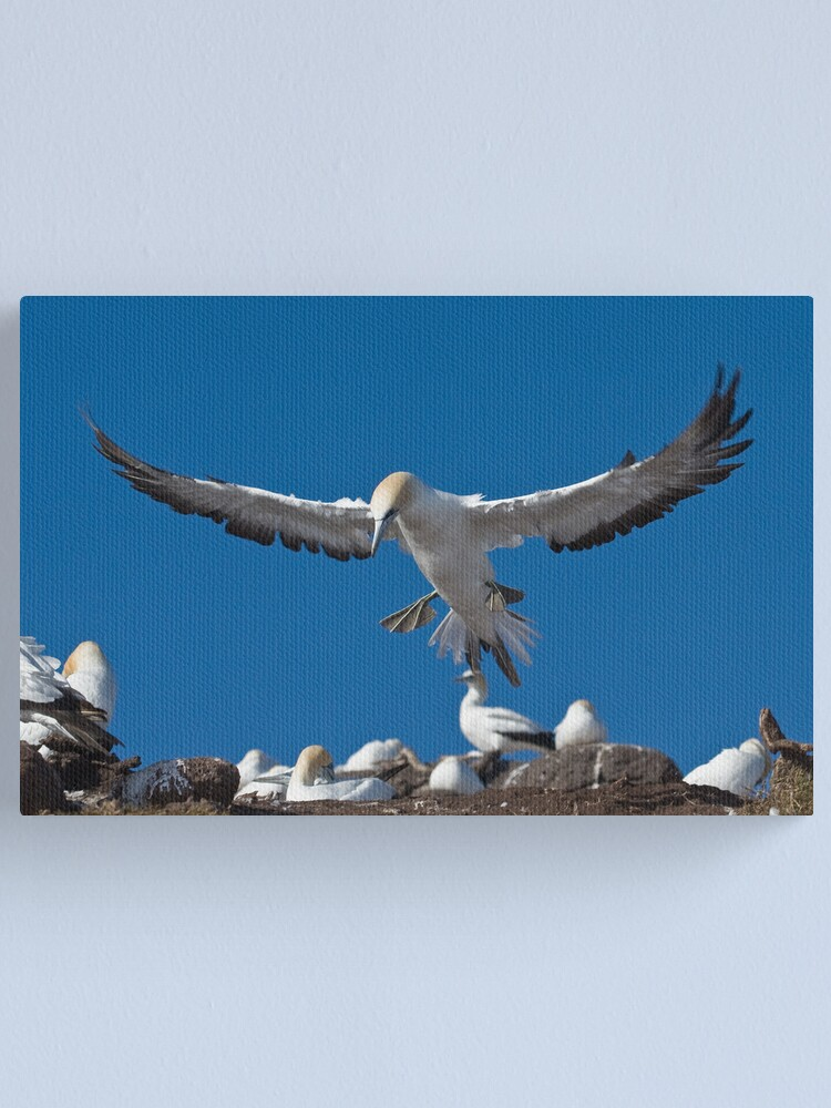 Alternate view of Flaps down Canvas Print