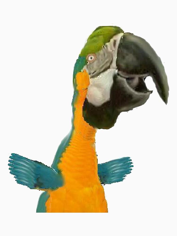 cartoon parrot by gdean