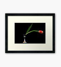 Tulip on black background Framed Print