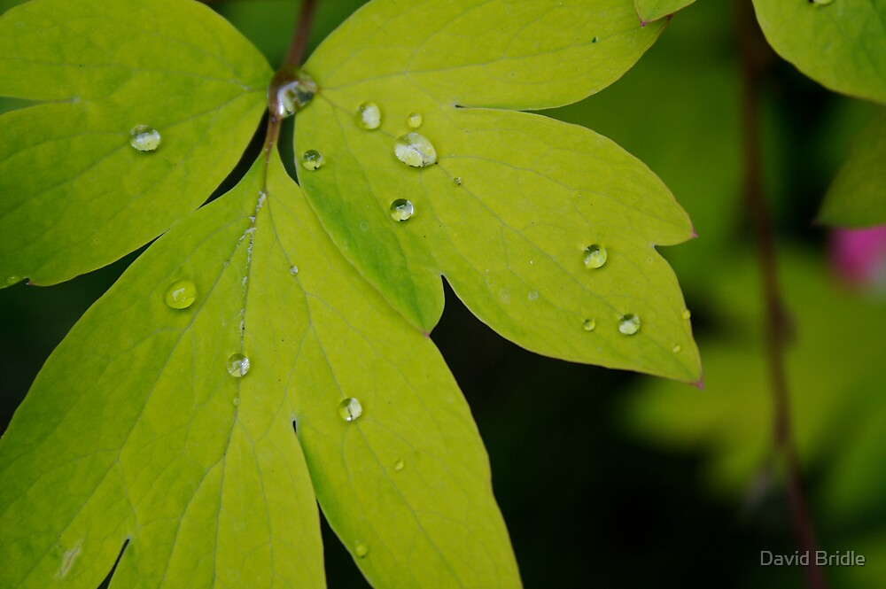 Droplets by David Bridle
