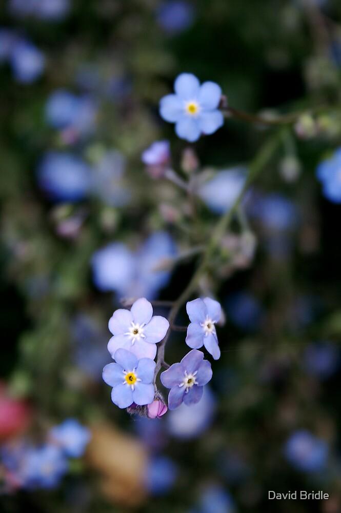 Blue by David Bridle