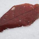 Snowflakes on Red Leaf by KimSha