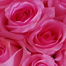 Sweet Roses by Els Steutel