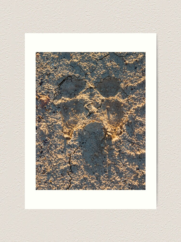 Alternate view of Camel scream Art Print