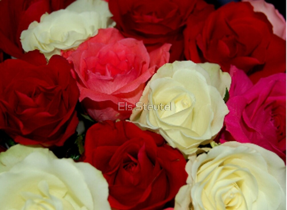 A Bunch of Roses by Els Steutel