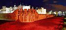 The Tower of London Poppies - 1 by Colin  Williams Photography
