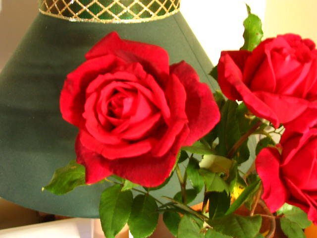 """.."""" a rose by any other name""""... by rrovin"""