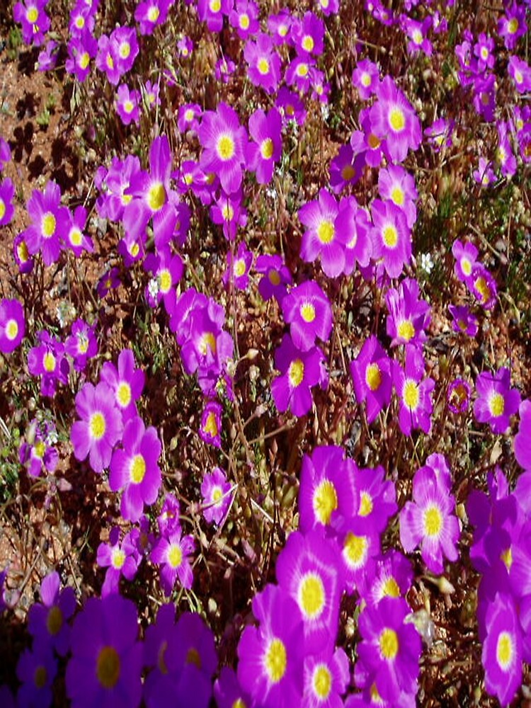 Wildflowers2 by shakoora2
