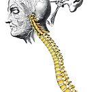 « colonne vertébrale » par Olga Lupi