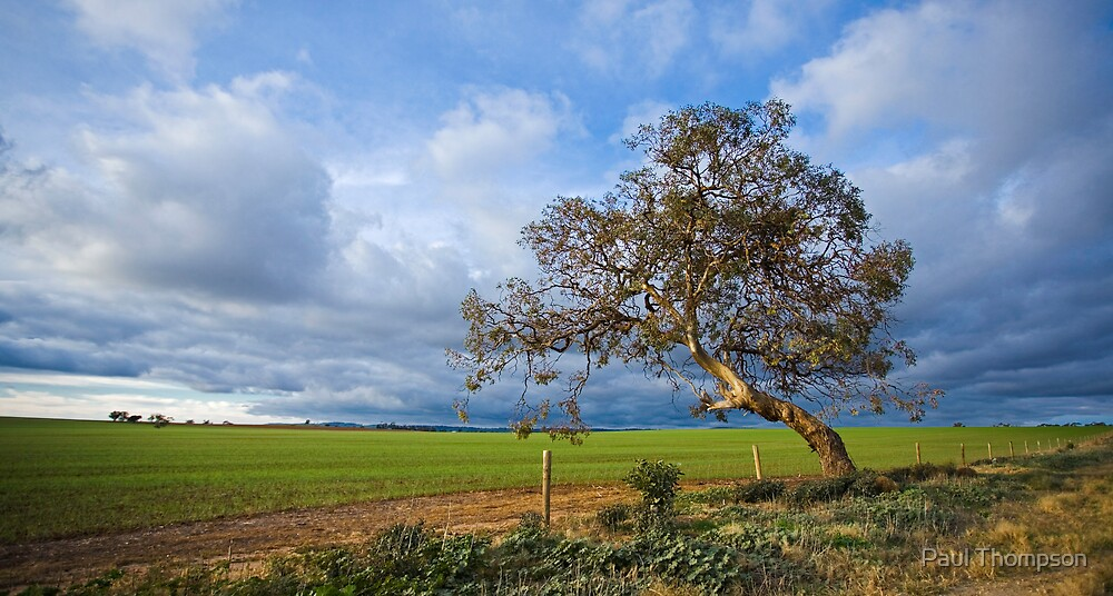 The Old Bent Tree by Paul Thompson