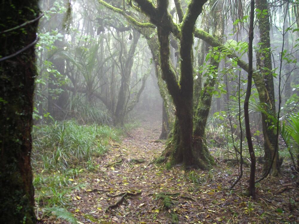 Taranaki Jungle by pipes182