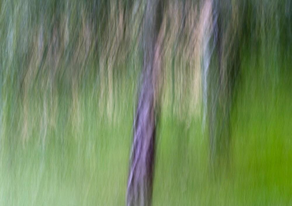 Digital Photographic Art by deniselees