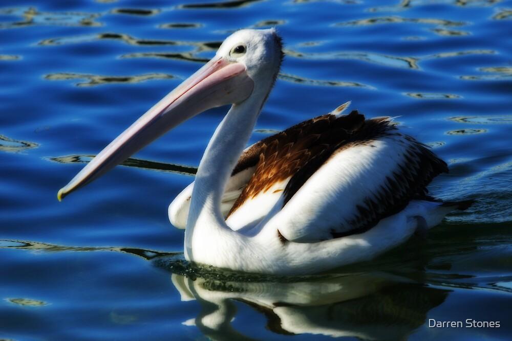 Pelican by Darren Stones