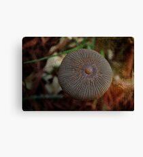 Nature's Button Canvas Print