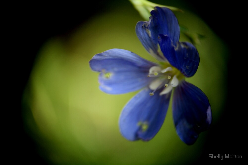 Little Blue by narrowpathphoto