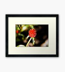 Red Spike Framed Print