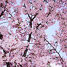 Pink by Vittorio Zumpano