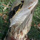 Bearded Dragon by Brett Habener