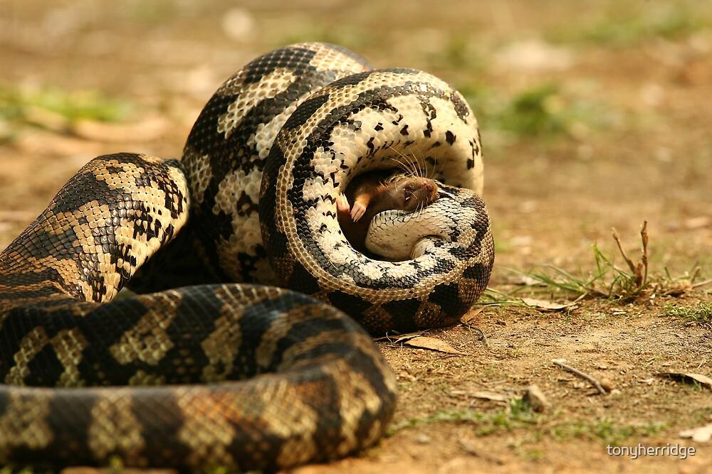 Python 6 by tonyherridge