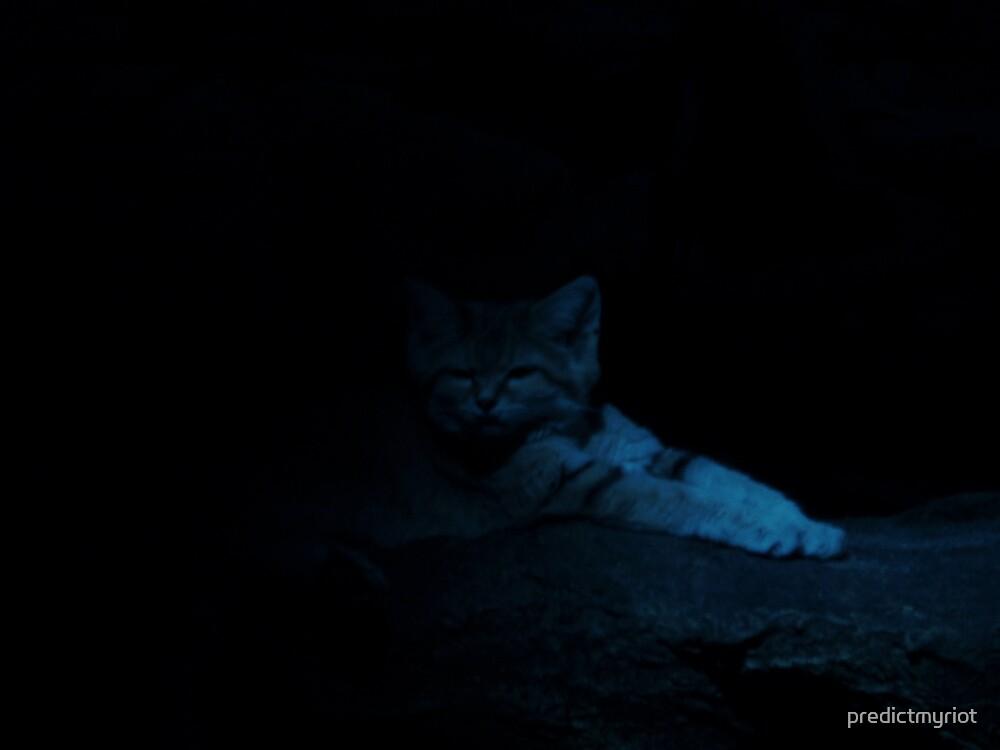 wild in the dark by predictmyriot