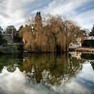 Duck Pond by NeilAlderney