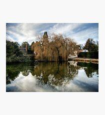 Duck Pond Photographic Print