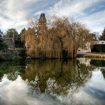 Duck Pond by NeilAlderney