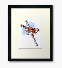 Russet Sparrow Framed Print