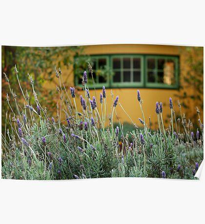 Lavender Cottage Poster