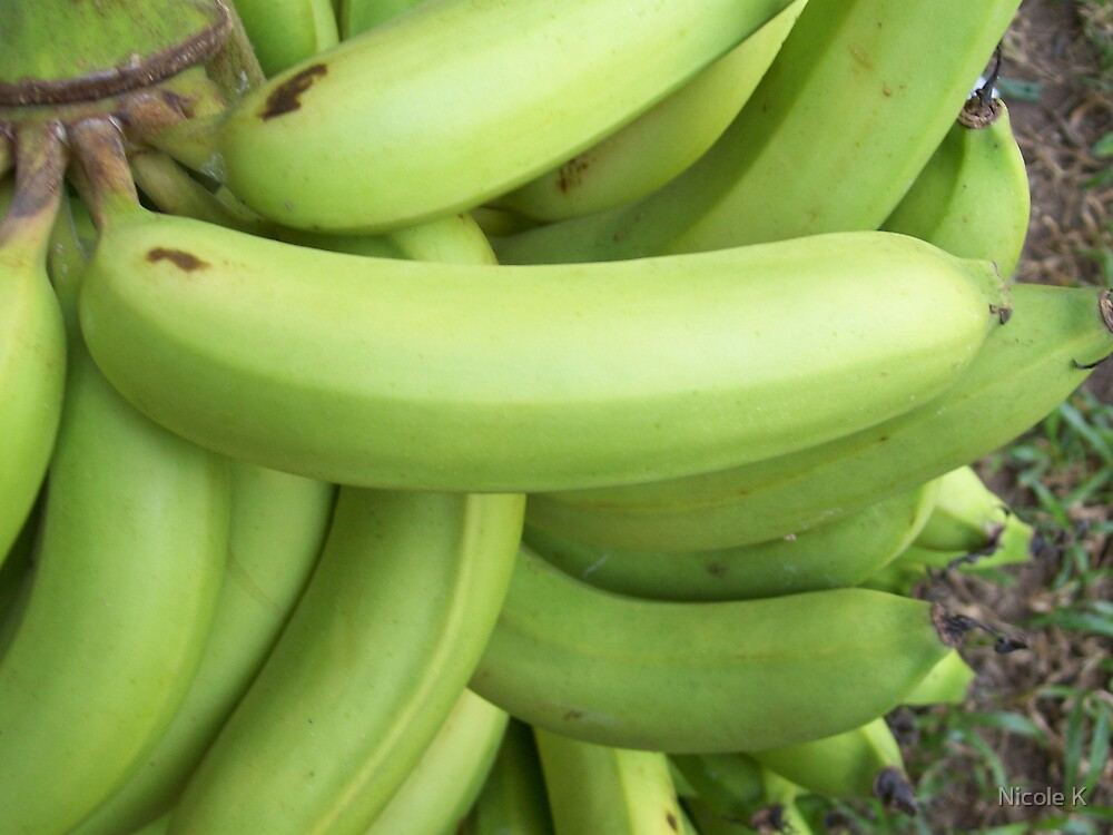 Bananas by Nicole K