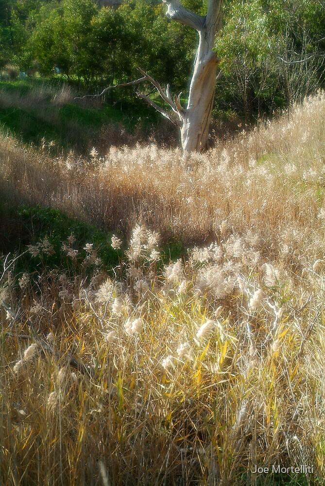 Grasses, Waurn Ponds Creek Bed by Joe Mortelliti