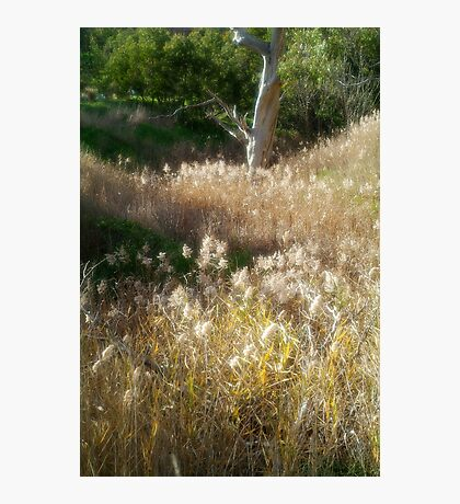 Grasses, Waurn Ponds Creek Bed Photographic Print