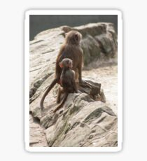 Baby baboon with its mother Sticker