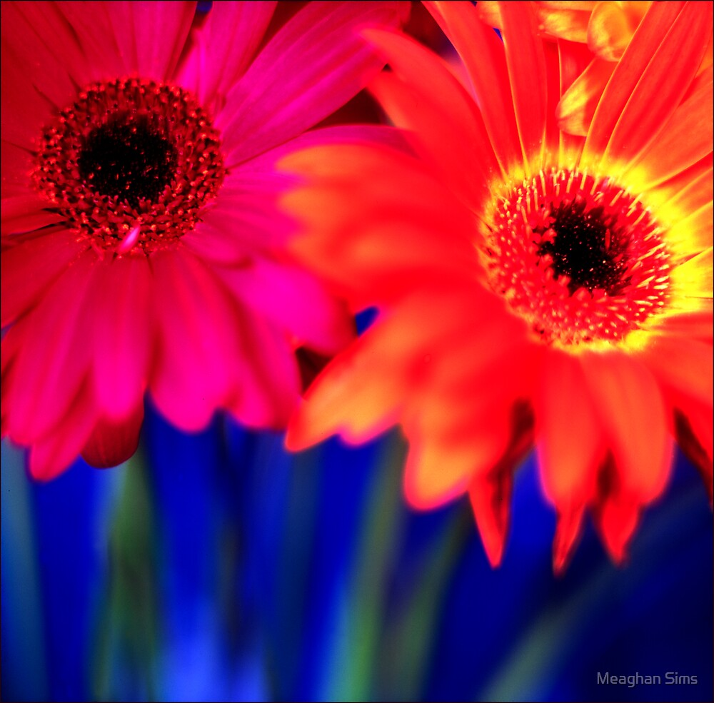 Flowers by Meaghan Sims