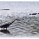 Great Heron by Kim Brown