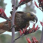 A feast fit for a Kaka.........!!    by Roy  Massicks