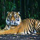 Tiger in Faux Oil by Rob Chiarolli