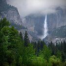 In the Mist _ Yosemite National Park by Barbara Burkhardt