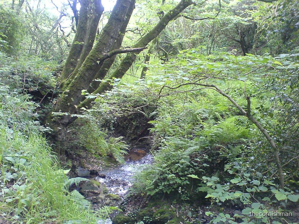Dizzard Woods by thecornishman
