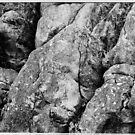 Gum Tree in Rocks by Brian Murray
