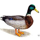 Duck by Lars Furtwaengler