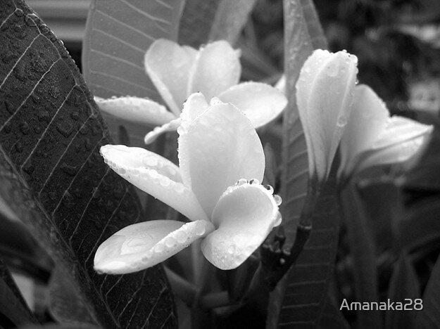 one dewy morning by Amanaka28