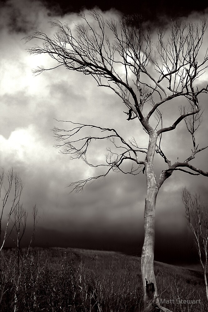 Dark Horizon by Matt Stewart