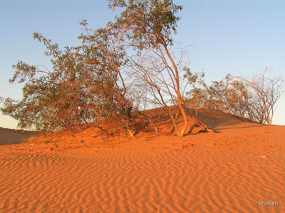 Perry Sandhills, NSW 2 by shaken