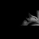 Pinkus black/white by Meagan11