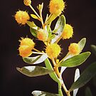 Australian Native Flower with Ant in Faux Oil by Rob Chiarolli
