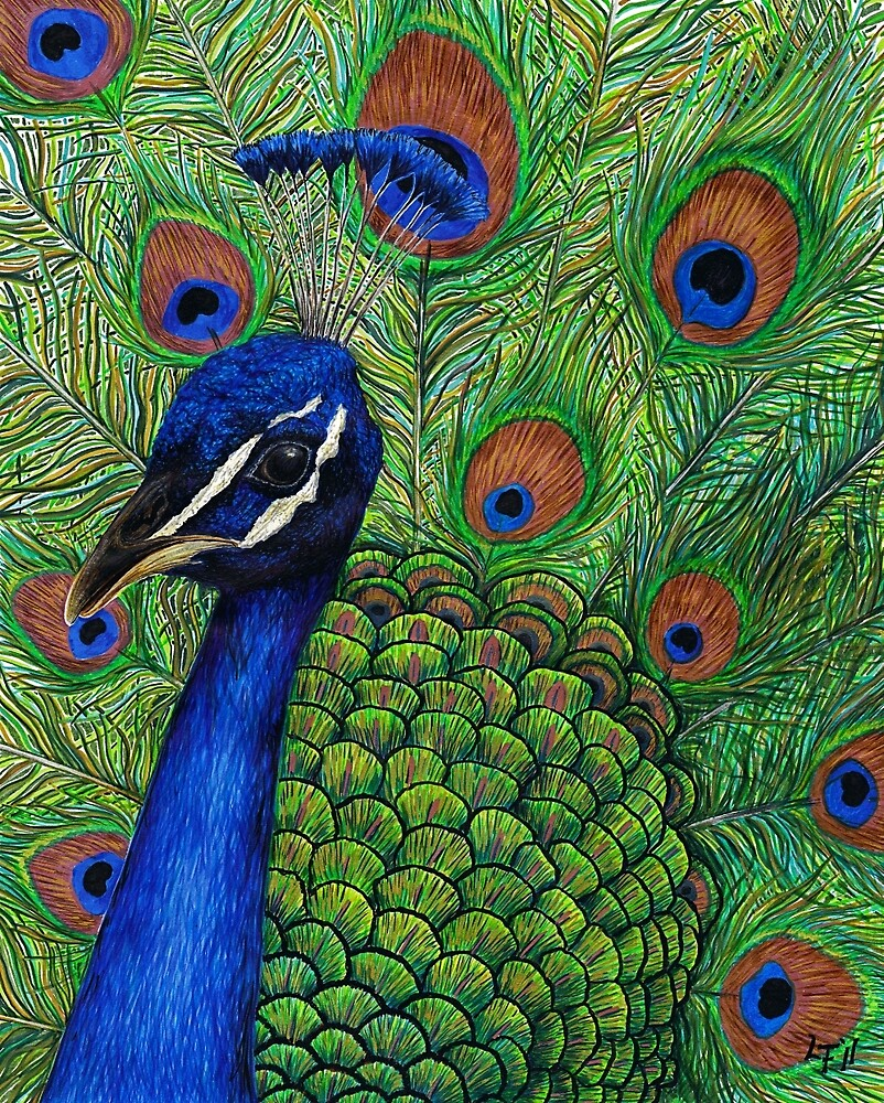 Peacock by Lars Furtwaengler